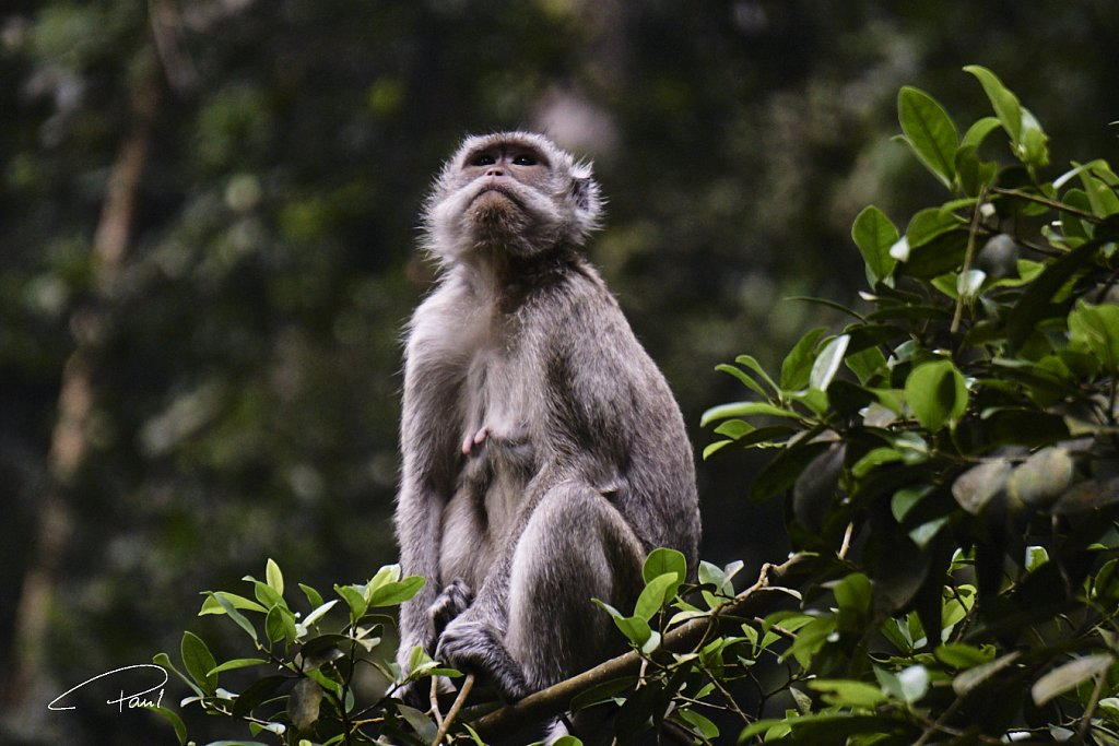 Monkey mother rests on a tree branch