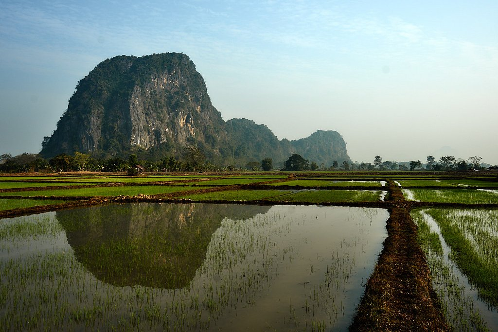 Paddy fields and hill