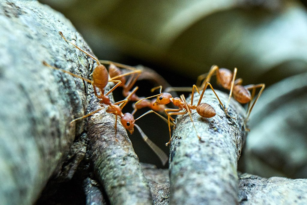 Ants are always busy