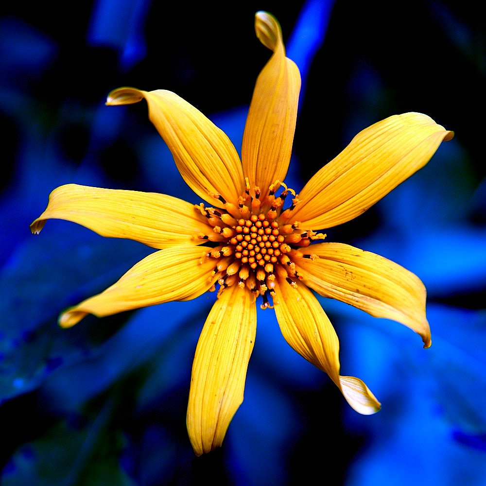 Flower with color contrast